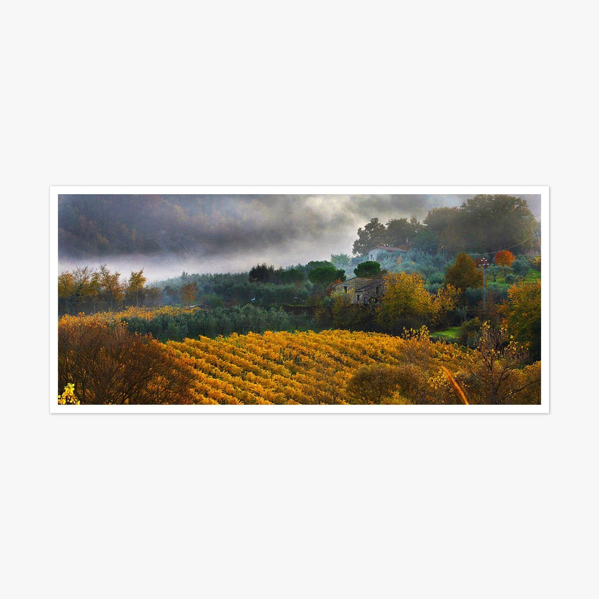 Autumn Vines, Orvieto by Roger Taylor