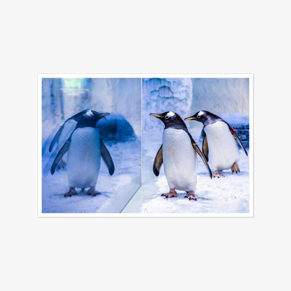 Penguins by Lucy Young