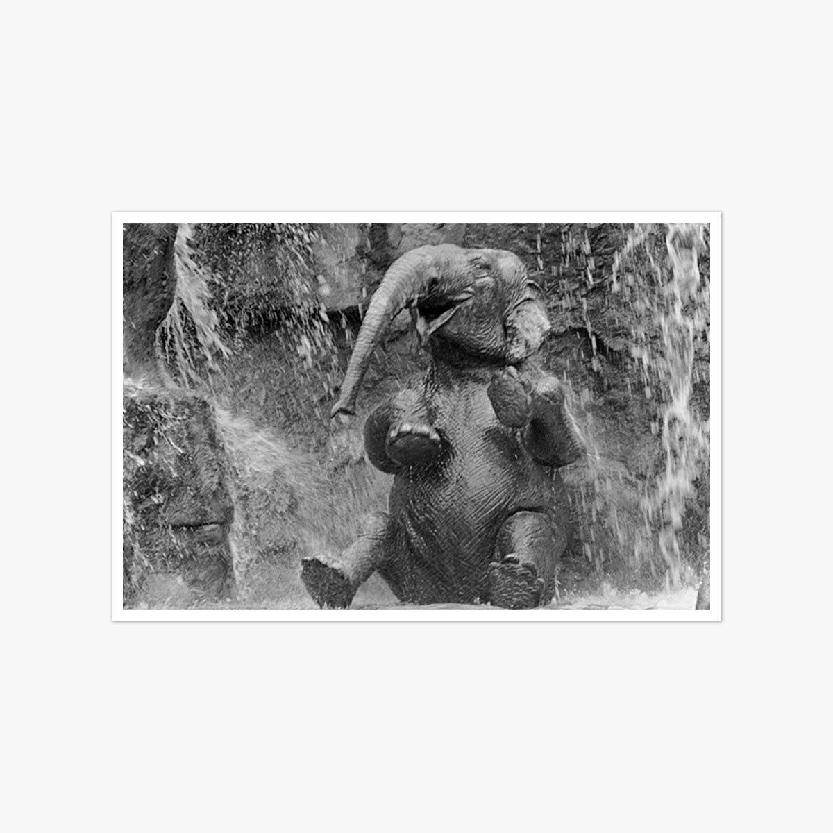 Elephant Ablutions by Harry Benson