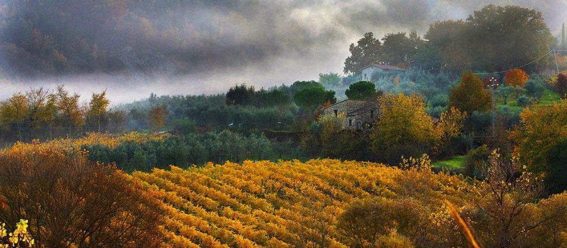 AUTUMN VINES, ORVIETO, UMBRIA ,ITALY